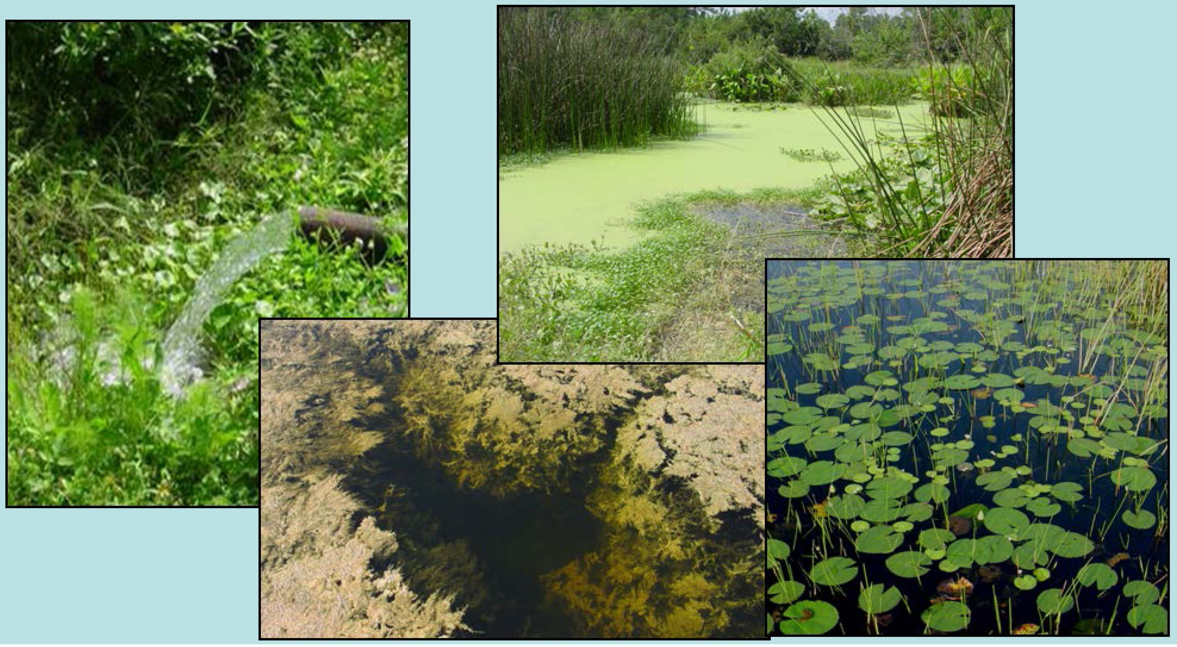 Wetlands for Water Treatment and Resource Recovery. (Photo: IDC, ICRISAT)